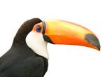 Toucan isolated white background.