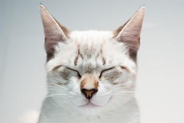 gato zen
