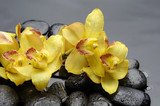 Fototapety branch yellow orchid with therapy stones on pebble