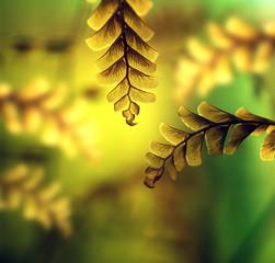 Maiden hair fern leaf