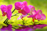 Fototapety Wasser,Orchidee