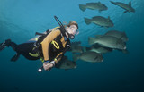 Diver and Bumphead Parrotfish