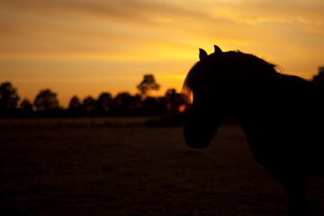 horse silhouette