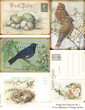 Vintage Bird Postcards