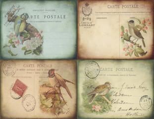 Vintage Bird Postcards