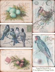 Vintage Birds and Nests Postcards