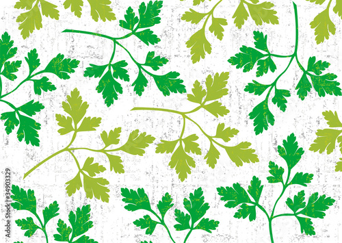 Parsley background on white.