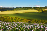 Idyllic summer landscape with poppies
