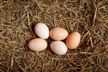 Five egg in hay