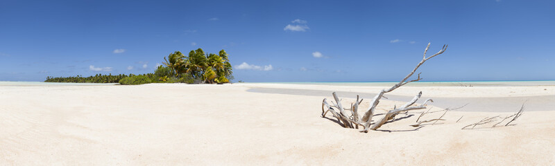 Dead wood on white sand beach panoramic view