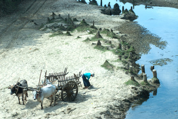 Sand cart carrying.