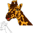 portrait giraffe