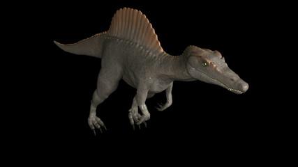 Looping Dinosaur Spinosaurus  Animation. isolated, alpha