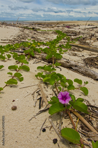 Purple flower on beach