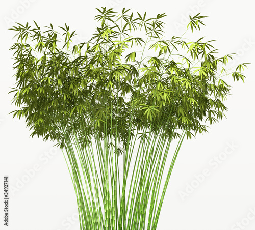 Fototapeten,bambus,grün,flora,floral