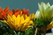 flower[gazania]_12