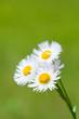 flower[philadelphia]_03