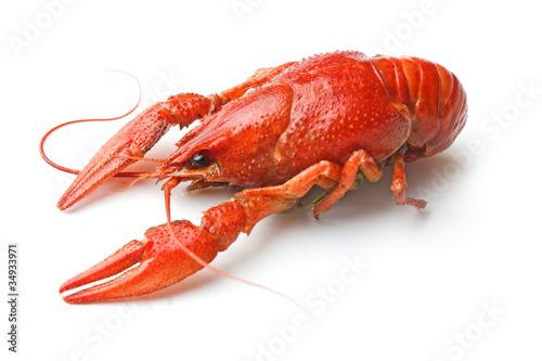 Boiled crawfish - 34933971