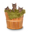 Little kittens in a basket