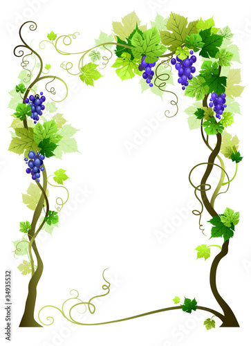 Blue vineyard frame