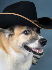 Cowboy Dog.
