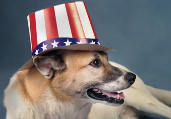 Uncle Sam Dog.