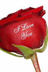 Red Rose that says I Love You