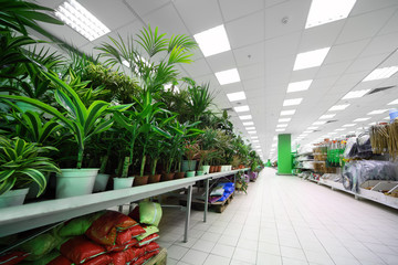 Shelves on the side with variety of pottery plants inside shop