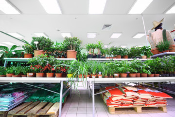 Shelves with variety of small pottery plants inside supermarket
