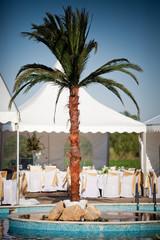 Oasis Palm