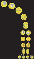 meiosis (cell division) scheme, on dark background