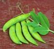 fresh pea