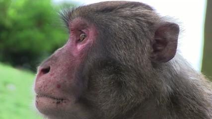 日本猿の驚き