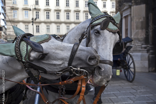 two horses in vienna