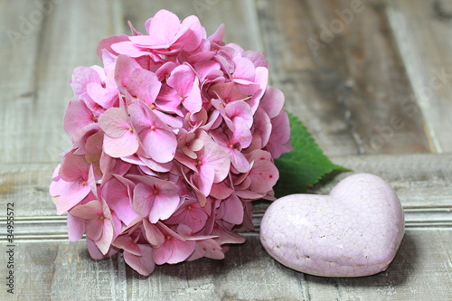 Staande foto Hydrangea Hortensien