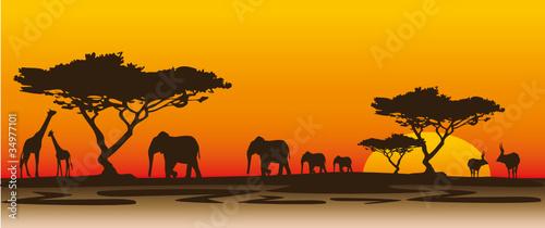 Fototapeten,landschaft,afrika,nashörner,abend