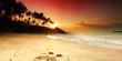 Fototapeten,sonnenuntergang,palme,tropisch,karibik