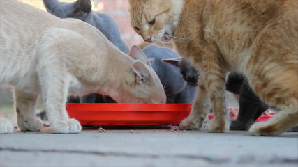 Cats eat