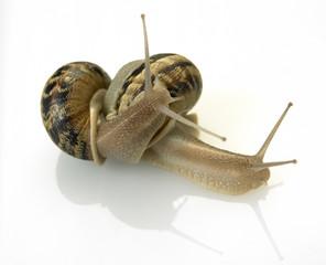 escargots3