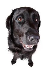 großer schwarzer Hund mit großer Nase und kleinen Füßen