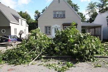 Fallen trees after a heavy summer storm