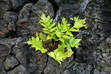 planta + rocas