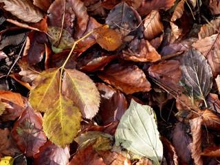 Atumn leafs