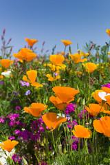 Sommerliche Blumenwiese