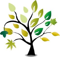Baum, Blätter, Bio, Eco