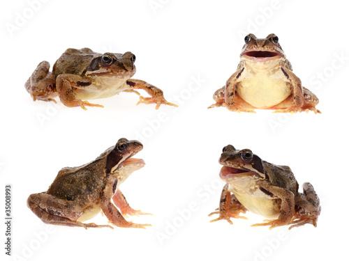 Foto op Aluminium Kikker Photo set of common european frog