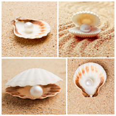 pearl on the seashell . treasure from the sea