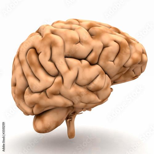 GamesAgeddon - Chrome Brain - Ansicht halb links - Lizenzfreie Fotos ...