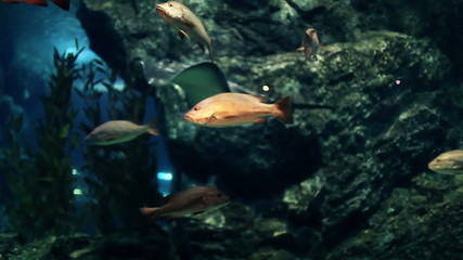 Colorful and curious looking fishes of giant aquarium