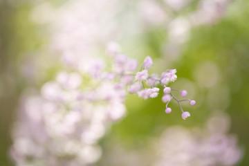 Pink blossoms on flower stem